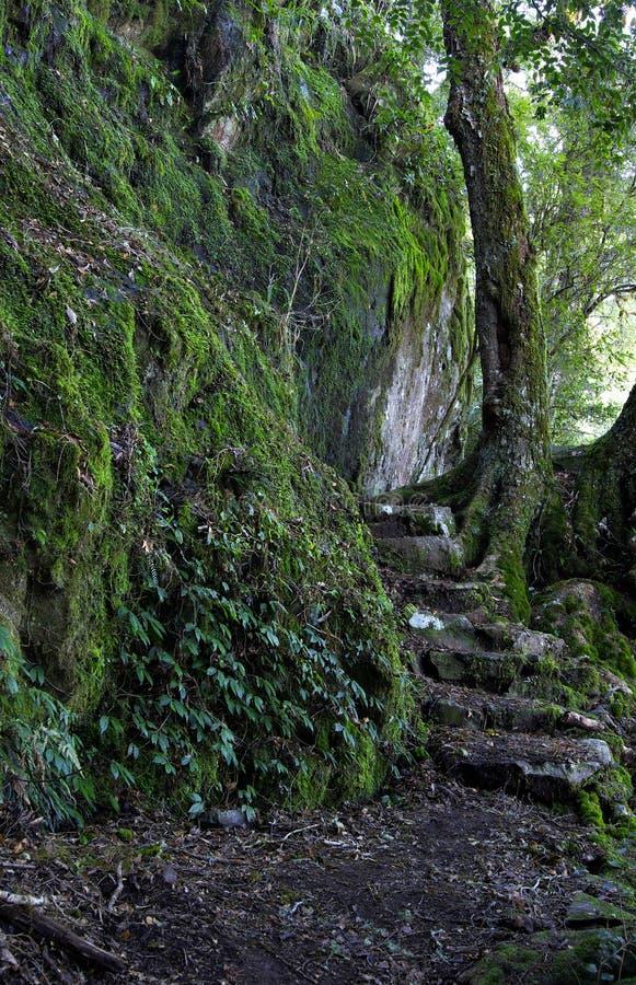 Regenwaldpfad stockfoto