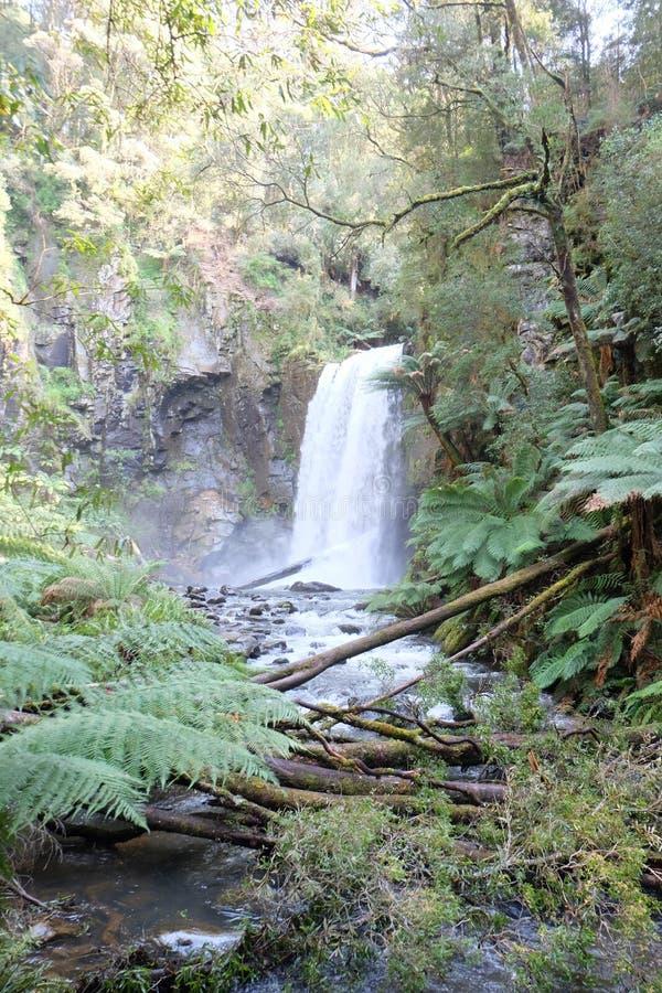 Regenwaldrotholz-Waldwasserfall lizenzfreie stockfotografie