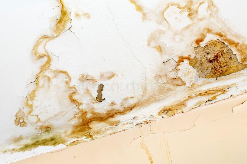 Regenwasserlecks auf der Decke wegen des sch?digenden Dachs, das Zerfall, Farbe abziehend und schimmelig verursacht lizenzfreies stockfoto