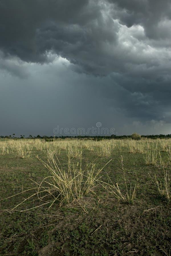 Regenwolke über Afrika-Landschaft, Serengeti stockfoto