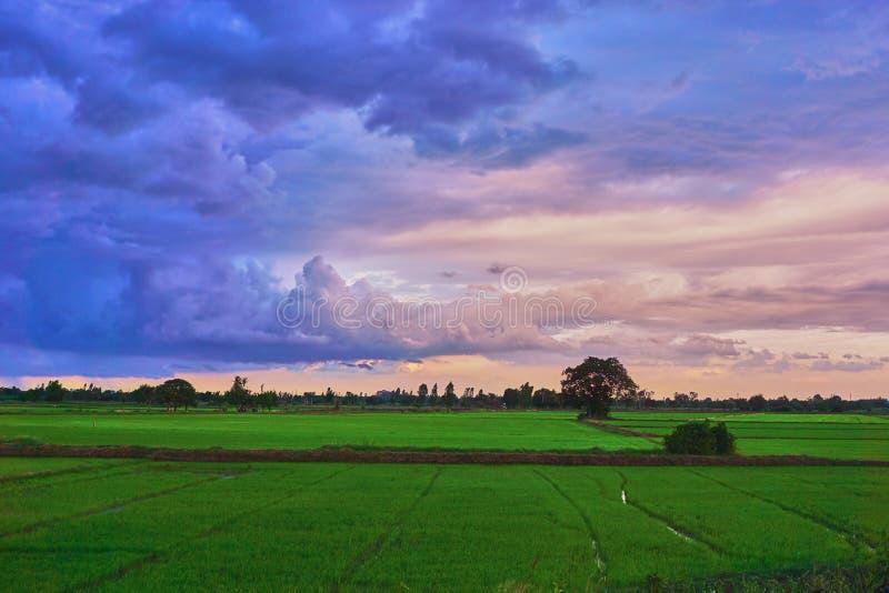Regenwolke über Reisfeld in der Sonnenuntergangzeit stockbild