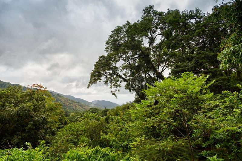 Regenwoud in Aripo-Vallei - Trinidad & Tabago stock foto's