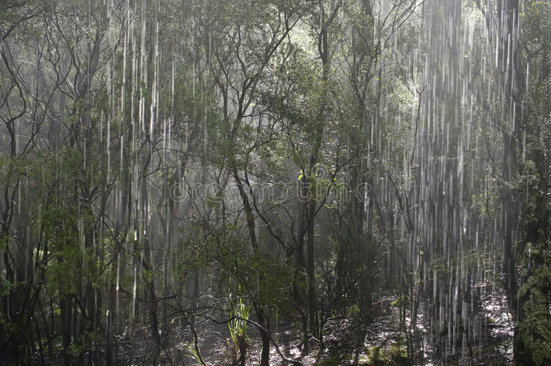 Regenwoud, Australië. royalty-vrije stock foto's
