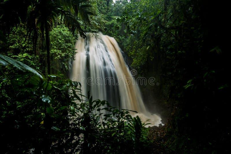 Regenwoud, bomen en installaties, rivier, waterval royalty-vrije stock afbeelding
