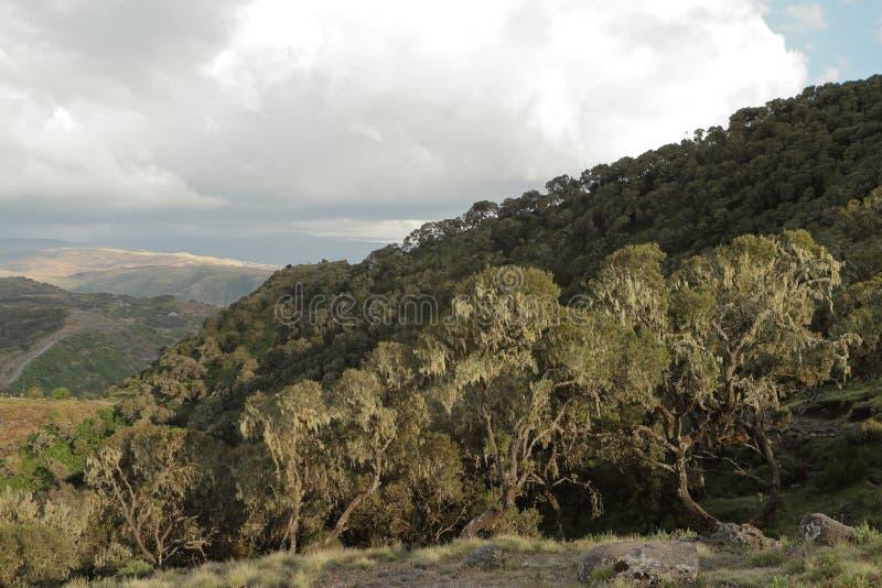 Regenwoud in de Simien-bergen van Ethiopië royalty-vrije stock afbeelding