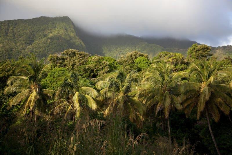 Regenwoud, Dominica royalty-vrije stock foto