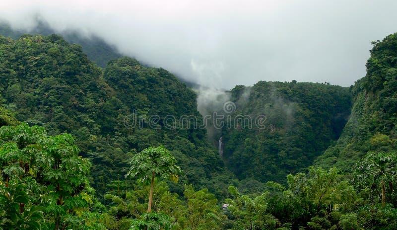 Regenwoud in Dominica stock afbeelding