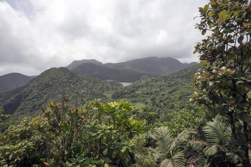 Regenwoud en bergen op Caraïbisch eiland stock afbeeldingen