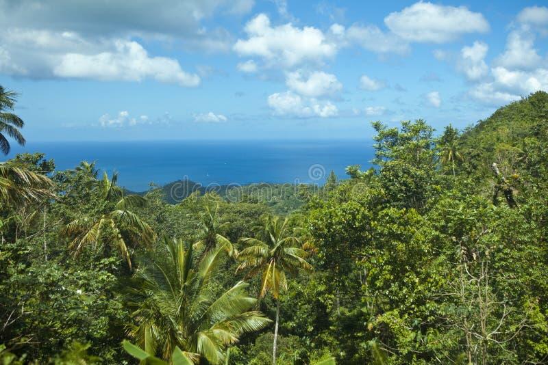 Regenwoud en oceaan stock afbeelding