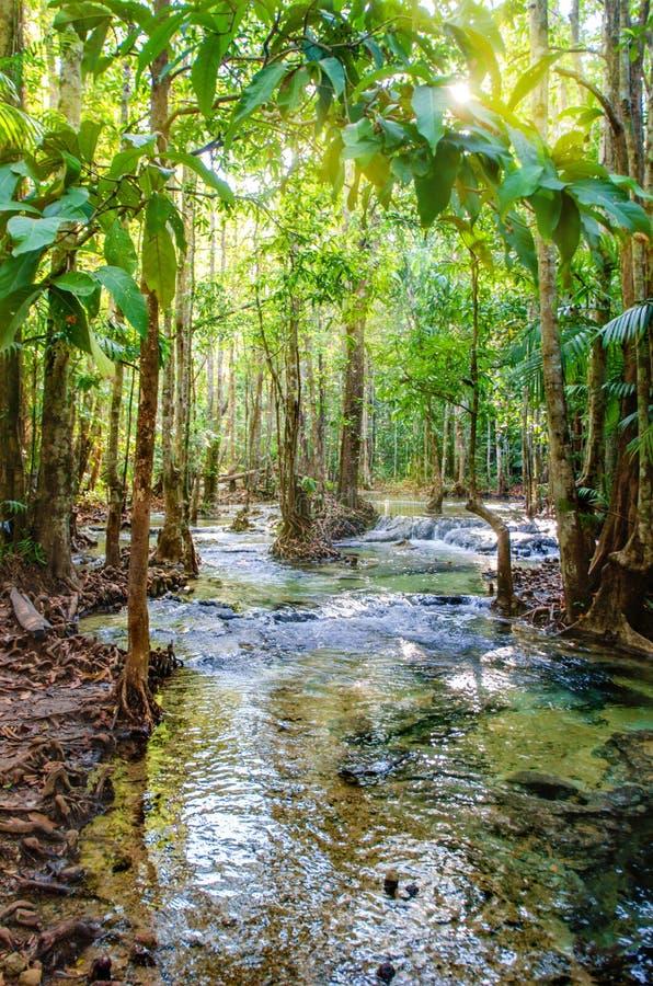 Regenwoud, Mangroven De rivier onder de bomen Nationaal Park, Thailand stock foto