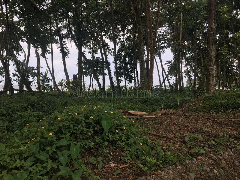 Regenwoud naast Ocena royalty-vrije stock afbeeldingen