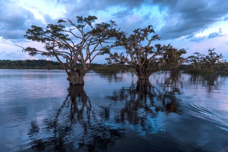 Regenwoud uit de Amazone Cuyabeno ecu royalty-vrije stock foto