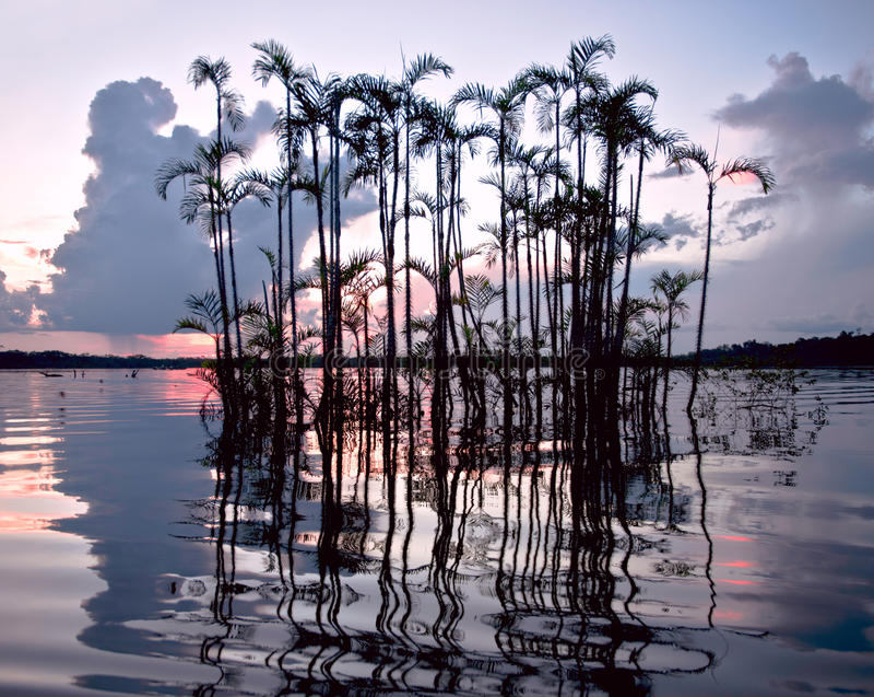 Regenwoud uit de Amazone. Laguna Grande, Nationaal Park Cuyabeno. ECU stock fotografie