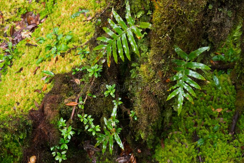 Regenwoudachtergrond met groene mossen en varen royalty-vrije stock afbeelding