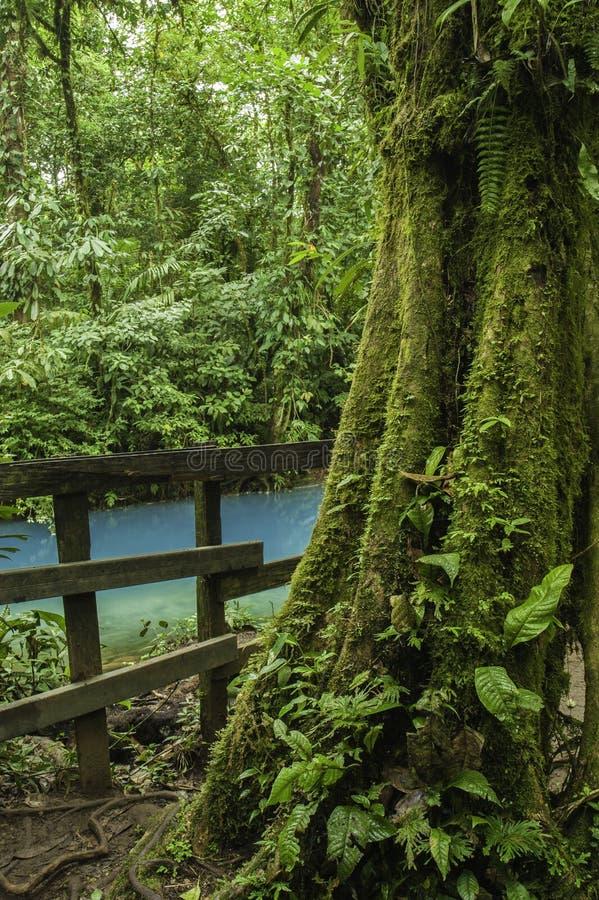 Regenwoudboom stock afbeeldingen