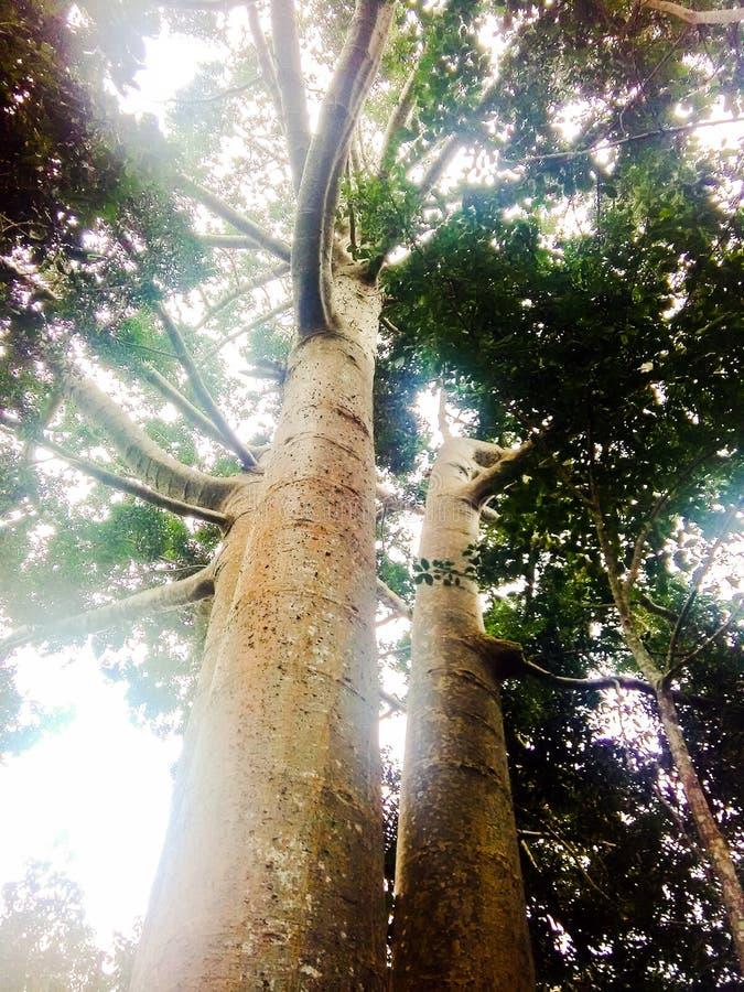 regenwouden stock afbeeldingen