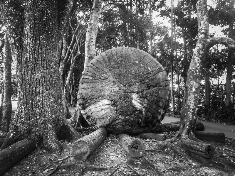 Regenwouden, parken, B&W-filter royalty-vrije stock fotografie