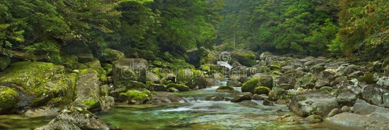 Regenwoudrivier in Yakusugi-Land op Yakushima-Eiland, Japan stock afbeelding