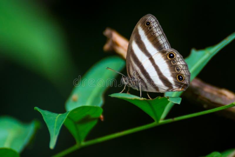 Regenwoudvlinder royalty-vrije stock afbeeldingen