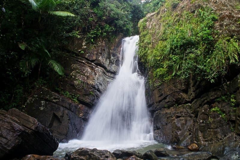 Regenwoudwaterval in Puerto Rico royalty-vrije stock afbeelding