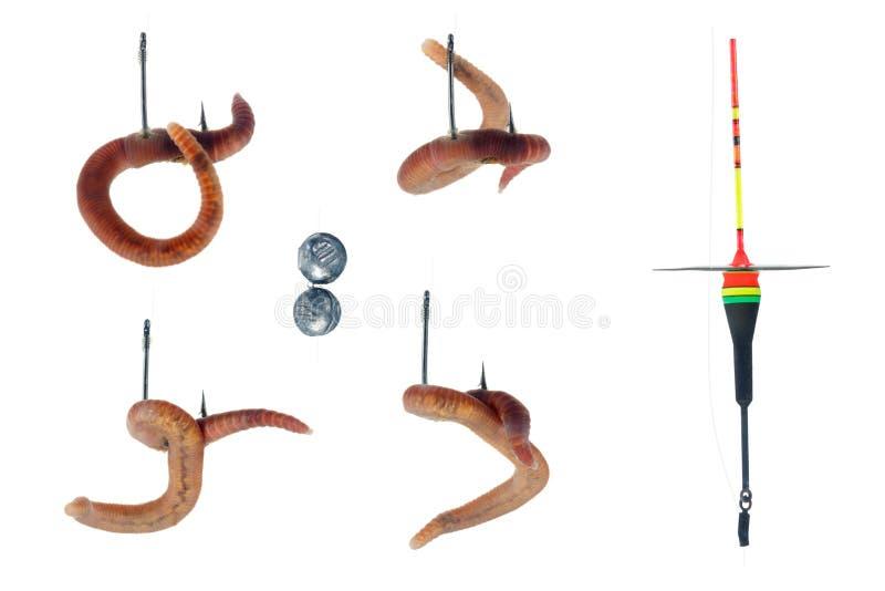 Regenwurm auf hoo, weißer Hintergrund lizenzfreies stockfoto
