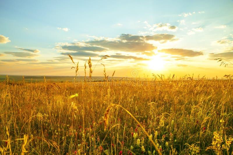 Região, curso, paisagem e natureza de Saratov de Rússia Alvorecer dramático alaranjado dourado amarelo no alvorecer sobre campos  fotos de stock royalty free