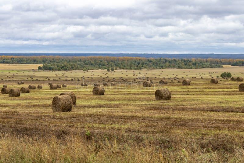 Região de Kaluga do campo do russo imagens de stock royalty free