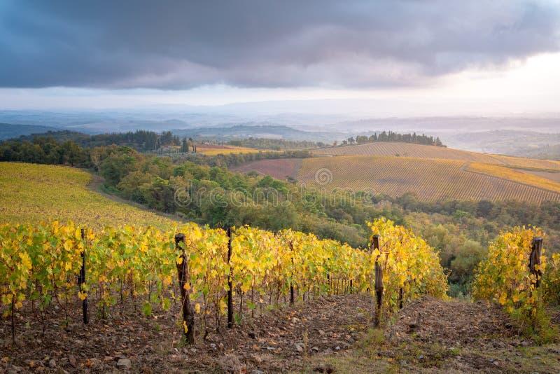 Região do Chianti, Toscânia, Itália Vinhedos no outono fotografia de stock