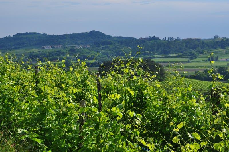 Região do vinho de Colli Orientali del Friuli, por do sol imagens de stock