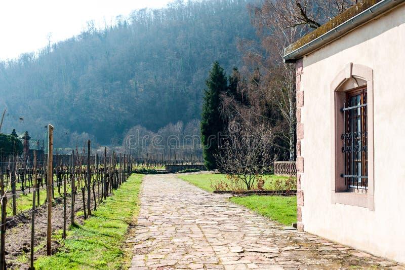 Região histórica do vinho do castelo francês típico, vinhedos em Alsa imagens de stock