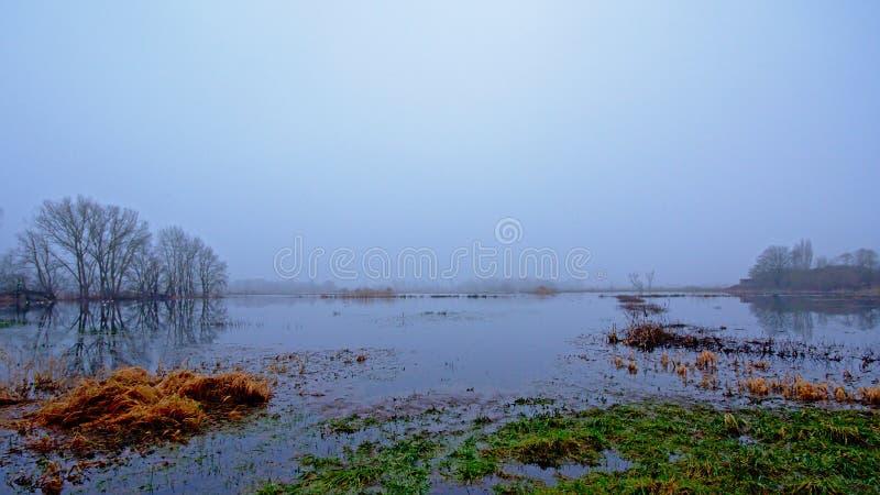 Região pantanosa nevoenta em Flanders com as árvores desencapadas que refletem na água fotos de stock