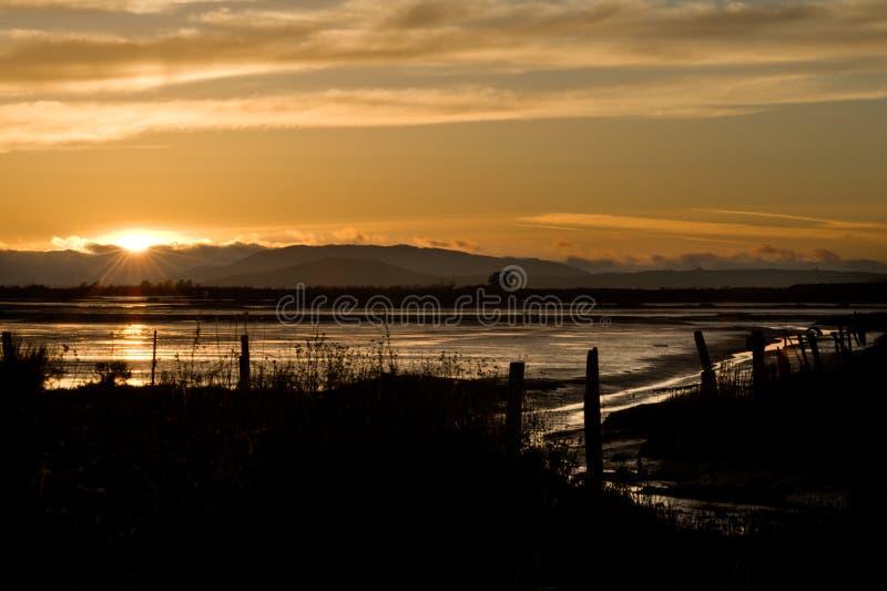Região pantanosa no por do sol foto de stock royalty free