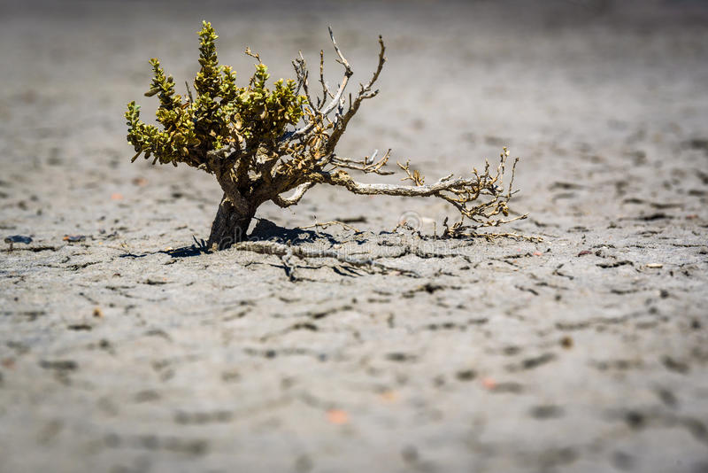 Região selvagem Bush de Bisti foto de stock