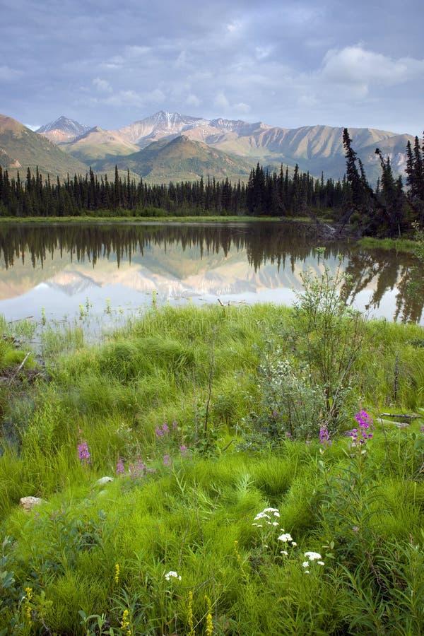 Região selvagem de Alaska foto de stock