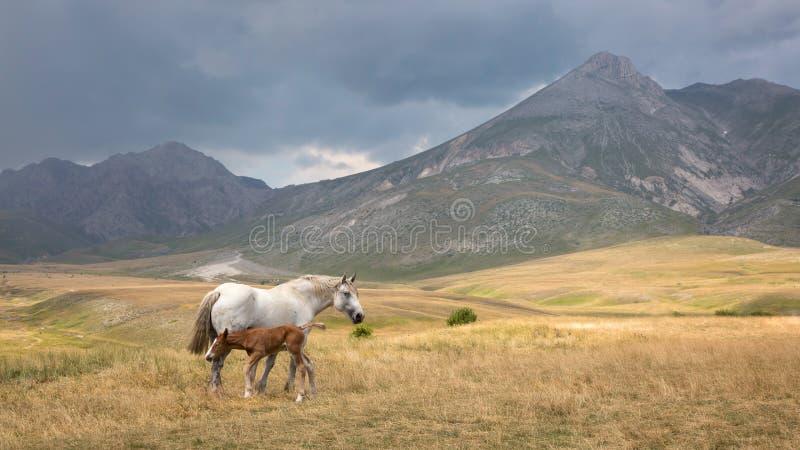 Região selvagem de Campo Imperatore, Abruzzo, Itália fotografia de stock