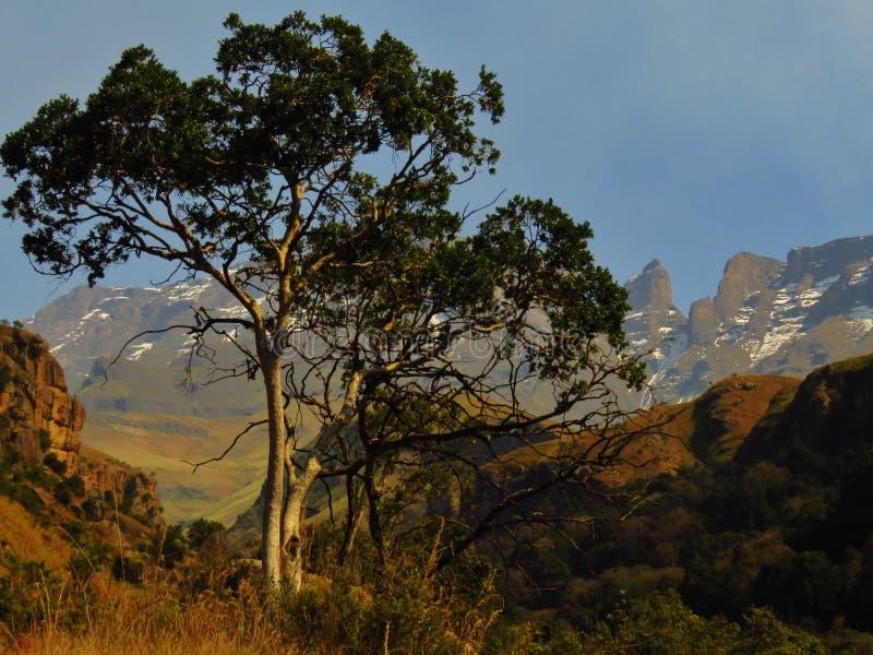 A região selvagem de Drakensberg foto de stock