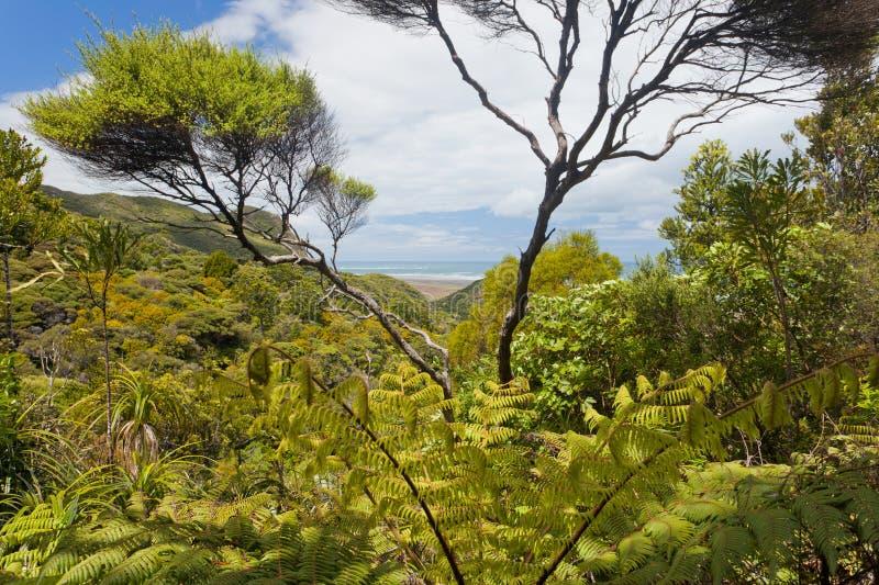 Região selvagem litoral da floresta do ferntree de NZ perto de Piha fotografia de stock royalty free