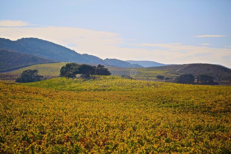 Região vinícola de Santa Barbara California imagens de stock royalty free