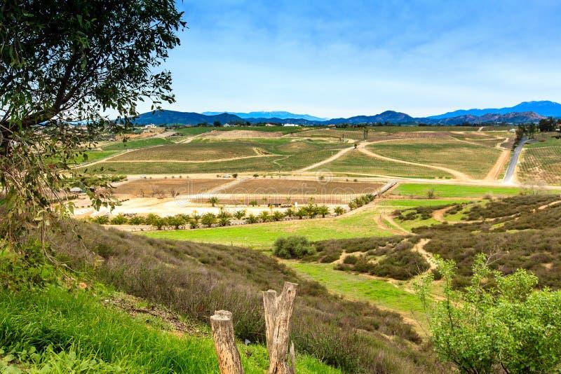 Região vinícola de Temecula foto de stock
