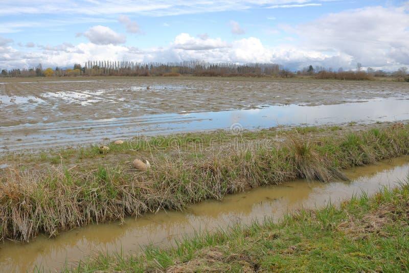 Región agrícola del invierno foto de archivo libre de regalías