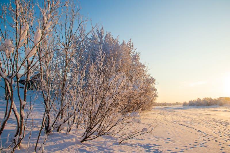 Región de Arkhangelsk Invierno cerca del pueblo Levkovka imágenes de archivo libres de regalías