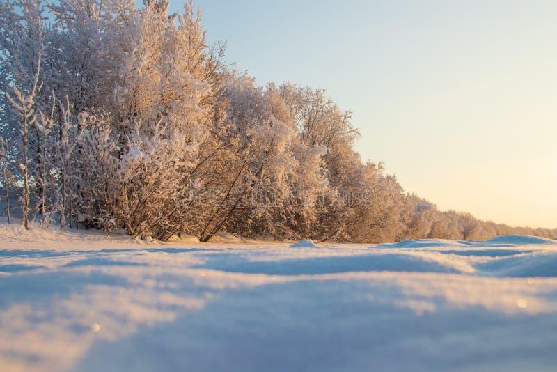 Región de Arkhangelsk Invierno cerca del pueblo Levkovka imagen de archivo libre de regalías