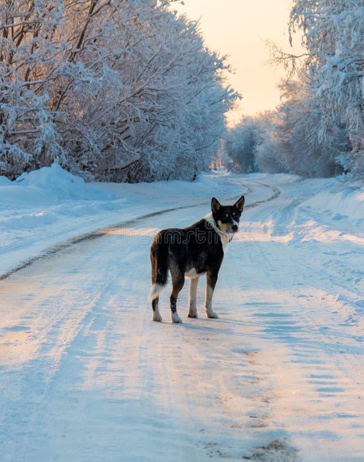 Región de Arkhangelsk Invierno cerca del pueblo Levkovka fotografía de archivo libre de regalías
