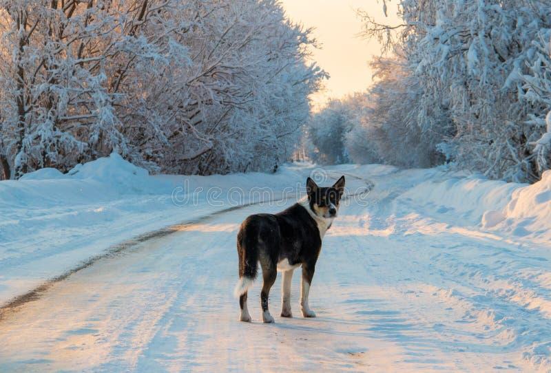 Región de Arkhangelsk Invierno cerca del pueblo Levkovka fotos de archivo libres de regalías