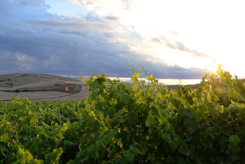 Región de Cerdeña, Italia Paisaje del viñedo fotografía de archivo