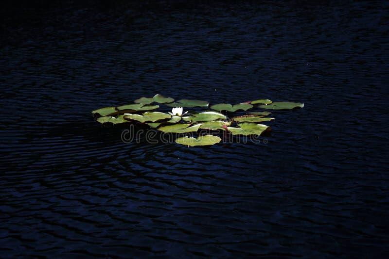 Región de Linevo Omsk del lago de la Federación Rusa foto de archivo libre de regalías