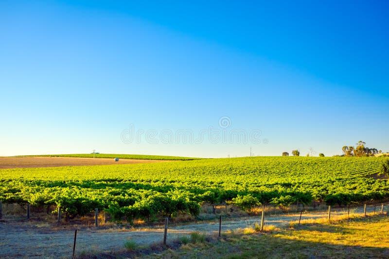 Región del vino de Barossa Valley en la puesta del sol imagenes de archivo