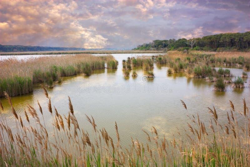 Región pantanosa foto de archivo