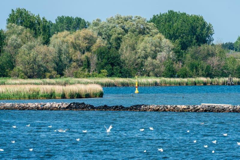 Región pantanosa en Hohe Duene en la costa de mar Báltico fotografía de archivo