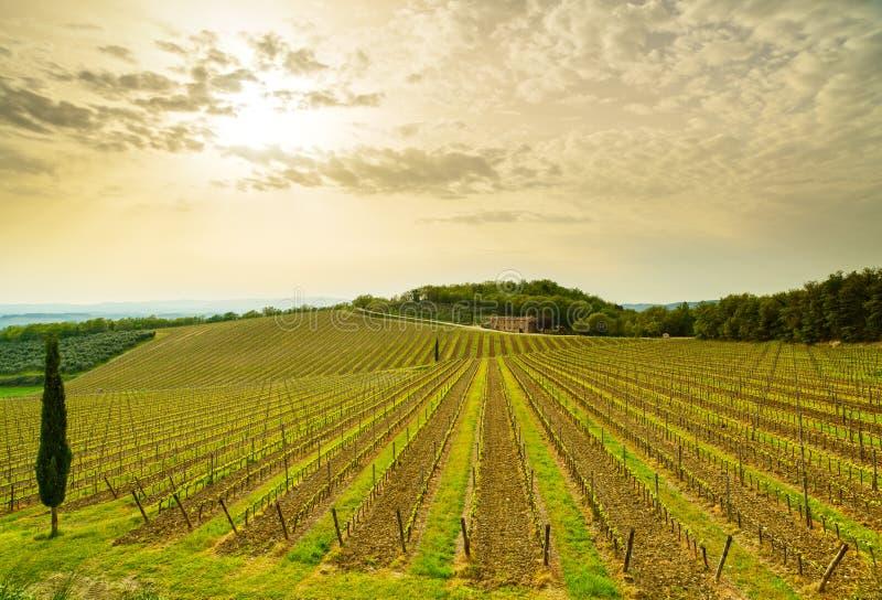 Región, viñedo, árboles y granja de Chianti en puesta del sol. Toscana, Italia imagenes de archivo